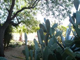 Foto 8 Ferien auf der Finca Casa-Nana Mallorca