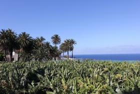 Foto 2 Ferienhaus Finca Fernandel auf der Kanaren Insel Teneriffa