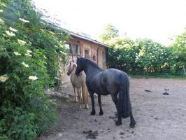 Foto 5 Ferienimmobilie und Pferdehof Altmark mit 14 ha Land
