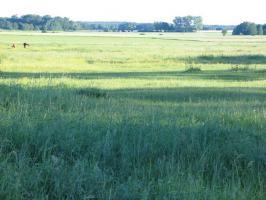 Foto 6 Ferienimmobilie und Pferdehof Altmark mit 14 ha Land