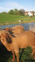 Foto 3 Ferienwohnung mit Angelteich, Ostsee, Holsteinische Schweiz