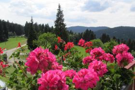 Foto 8 Ferienwohnung im Schwarzwald