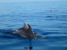 Foto 11 Ferienwohnung direkt am Meer mit Meeresblick