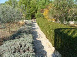 Foto 4 Ferienwohnungen auf der Insel Vir bis zu 10 Personen in Dalmatien bei Zadar