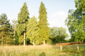 Foto 8 Ferienwohnungen in Kuchelmiß, Mecklenburger Seenplatte