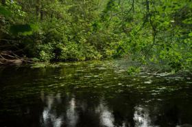 Foto 9 Ferienwohnungen in Kuchelmiß, Mecklenburger Seenplatte