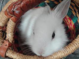 Filou, 3 Monate alt, m�nnlich, sucht Zuhause!