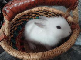 Foto 2 Filou, 3 Monate alt, m�nnlich, sucht Zuhause!