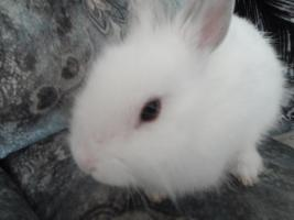 Foto 3 Filou, 3 Monate alt, m�nnlich, sucht Zuhause!