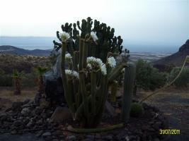 Foto 8 Finca auf Gran Canaria