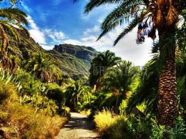 Foto 2 Finca Gran Canaria zu verkaufen - Barranco de Ayagaures