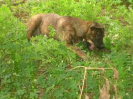 Foto 3 Fiona- bildschöner Welpe sucht ein Zuhause (Tierschutzhund)