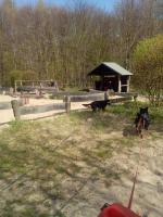 Foto 3 Fitness für Frauchen u Hunde Mensch Hund Fitness Coaching Duisburg Ratingen Düsseldorf Kassel. Geldern - Dog Team NRW