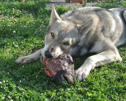 Fleischabschnitte/Schlachtreste und ganze Tiere gesucht . Preis VB