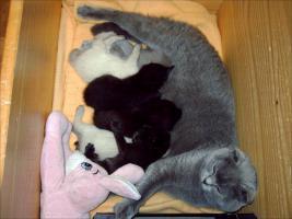 Foto 6 Fold Babys