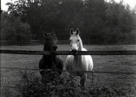 Foto 2 Fotografie in Black&White