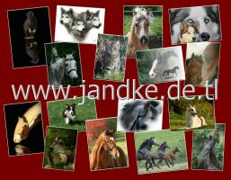 Fotoshooting f�r Tiere