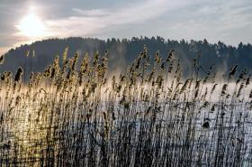 Fototapeten aus der Natur
