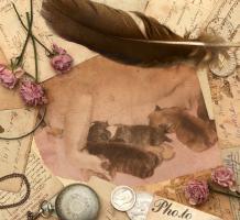 Foto 6 Frabzösische Bulldoggen Babys mit Papieren aus liebevoller Hausaufzucht