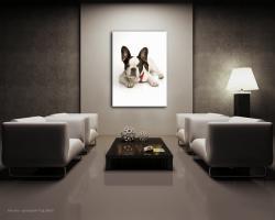 Foto 2 Französische Bulldogge - Bild auf Leinwand