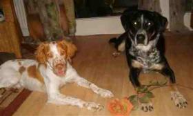 Frau (62) mit Hund sucht Haus mit Grund
