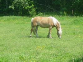 Freie Offenstallplätze f. Ponys, Großpferde, Rehepferde u. Rentnerpferde