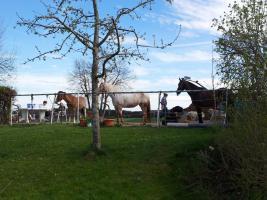 Foto 2 Freie Pferdeboxen - ideal für Rehe- und EMS-Pferde