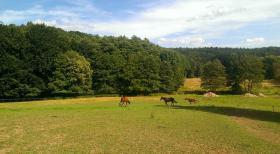 Foto 2 Freie Plätze für ihr Pferd in idyllischer Lage