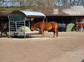 Freie Plätze in pferdegerechter Offenstall-, Bewegungsstallanlage