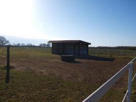Foto 2 Freie Plätze in pferdegerechter Offenstall-, Bewegungsstallanlage