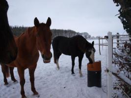 Foto 4 Freie Plätze in pferdegerechter Offenstall-, Bewegungsstallanlage
