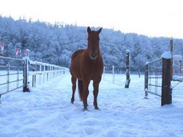 Foto 6 Freie Plätze in pferdegerechter Offenstall-, Bewegungsstallanlage