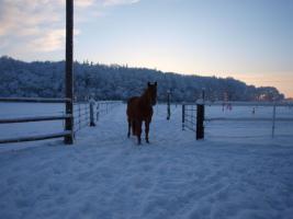 Foto 7 Freie Plätze in pferdegerechter Offenstall-, Bewegungsstallanlage
