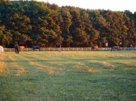 Foto 8 Freie Plätze in pferdegerechter Offenstall-, Bewegungsstallanlage