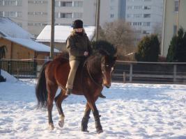 Freieitpferd - Beistellpferd