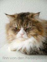 Foto 3 Freier Katzenverein