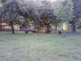Freitzeitgrundstück/Forst- und Landwirtschaft in 66894 Lambsborn