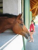 Foto 3 Freizeit- und Familienpferd, für Gelände, Hobby, Western