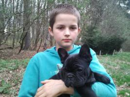 Foto 2 French Bulldog Welpe lackschwarz (beide Eltern schoko), freiatmend