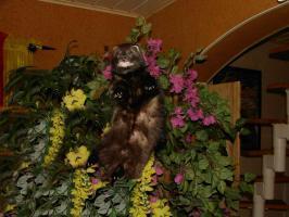 Foto 5 Frettchen Jungtiere