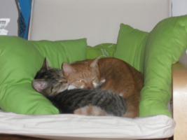 Frida & Joachim suchen liebevolle Menschen