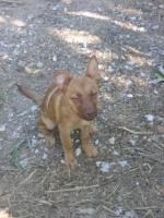 Foto 2 GARY - lebensfrohes Hundekind sucht Familienanschluß (Tierschutzhund)
