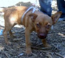 Foto 3 GARY - lebensfrohes Hundekind sucht Familienanschluß (Tierschutzhund)