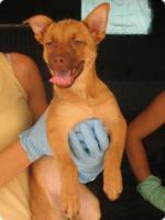 Foto 4 GARY - lebensfrohes Hundekind sucht Familienanschluß (Tierschutzhund)