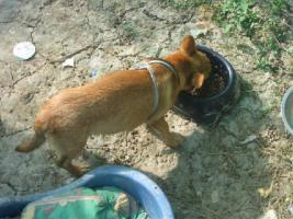 Foto 5 GARY - lebensfrohes Hundekind sucht Familienanschluß (Tierschutzhund)