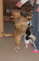Foto 3 Ganz Dringend wird Zuhause für Tobi gesucht
