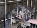Ganz lieber Labrador Mix, Rüde, sucht dringend liebes Zuhause/Pflegestelle !