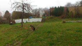Foto 10 Garten 50 km von Berlin  in Ostende zu verkaufen 865 qm