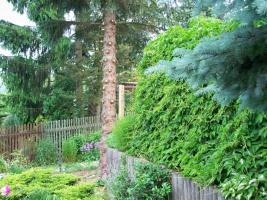 Foto 2 Garten 860qm Eigent. mit Bungalow 40qm
