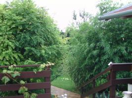 Foto 5 Garten mit Blockhaus